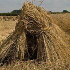Wheat sheaf by sandyprints