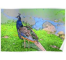 Colorful Pheasant Poster