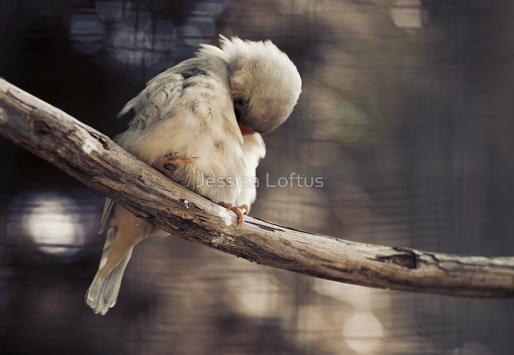 Shy by Jessica Loftus