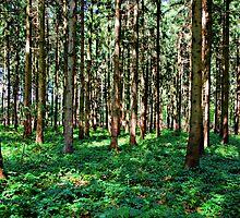 Wood by Daidalos