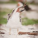 """Tree Stand?"" - A Juvenile Black Skimmer by John Hartung"