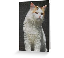 Screen Cat Greeting Card