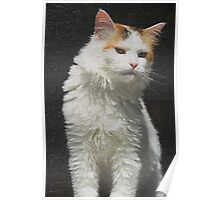 Screen Cat Poster