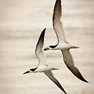 """Aerial Formation"" - black skimmers by ArtThatSmiles"