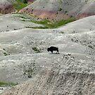 Badlands 3 - Bison by dandefensor