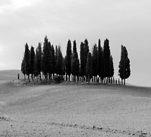 B&W Tuscan Trees by David Kent