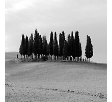 B&W Tuscan Trees Photographic Print