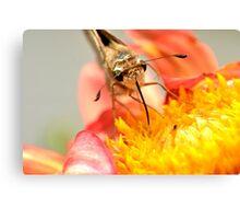 Got Nectar? Canvas Print