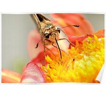 Got Nectar? Poster