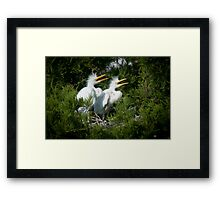 Young Great Egrets call out from nest Framed Print
