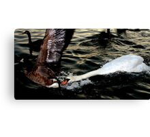 Wild life at its Finest Canvas Print