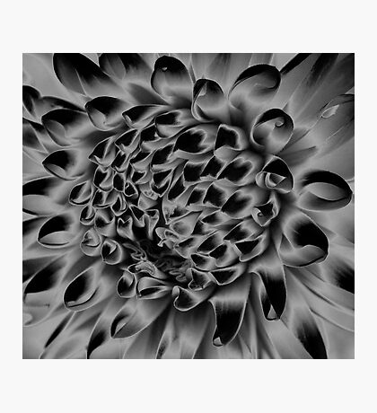 Shadow Blossoms Photographic Print