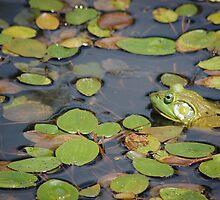 Bullfrog by Erika Montoya