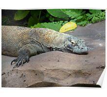 Lazy Iguana Poster