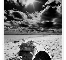 Driftwood Cleethorpes by Keith Stocks