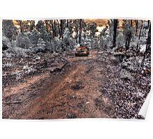Jarrahwood forest track IR #2 Poster