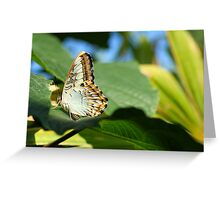 The Classical Beauty of Nature by Liane Pinel Greeting Card