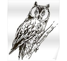Owl hand drawn Poster