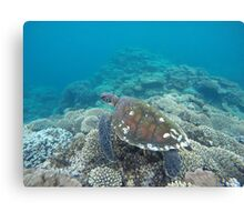 Sea Turtle, Coral bay, Western Australia Canvas Print