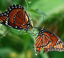 Twin butterflies by jozi1