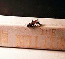 The Bell Curve by Shane Highfill