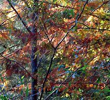 Autumn Fire by dez7