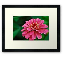 Pinky Touch Framed Print
