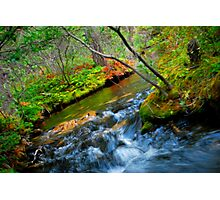 Song of the Stream Photographic Print