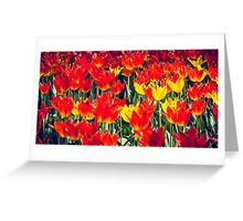 Fire Tulips Greeting Card