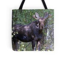 The young bull moose is back Tote Bag