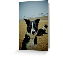 Colorized Dog Greeting Card