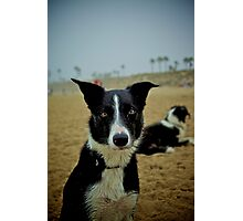 Colorized Dog Photographic Print