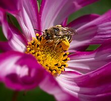 Bee packing pollen by Celeste Mookherjee