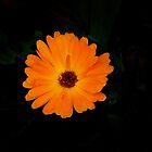 Sunshine by Carol Bleasdale