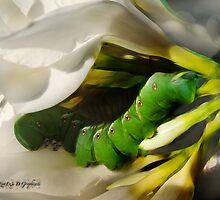 Garden Invader (Views: 259 as of 12-29-11) by Rhonda Strickland