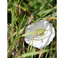 Ahhhh Grasshopper Photographic Print