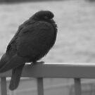 pigeon by Heike Nagel