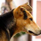 Dog by Shiju Sugunan