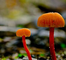 Small and Smaller Fungi by Murray Wills