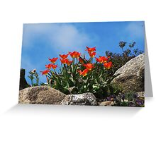 Tulip Season  Greeting Card