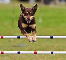 New Zealand Dog Agility by Kimball Chen