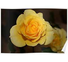 Aunty's Yellow Roses Poster