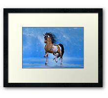 Buckskin Paint Stallion Framed Print