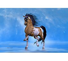 Buckskin Paint Stallion Photographic Print
