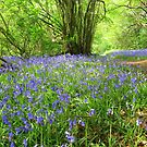 Bluebells by gm8ty
