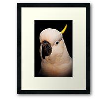 Portrait of a Cockatoo Framed Print