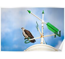 Osprey on a compass Poster