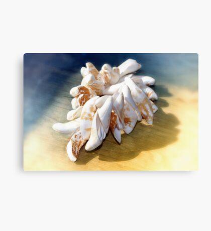 Viet Nam Sea Shells  Canvas Print