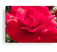 Rose of Rememberance Canvas Print