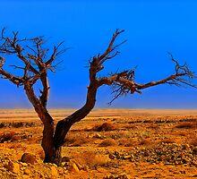 Tree in desert by Benjamin Gelman